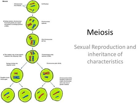 Sexual Reproduction and inheritance of characteristics