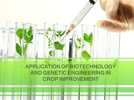 APPLICATION OF BIOTECHNOLOGY AND GENETIC ENGINEERING IN CROP IMPROVEMENT.
