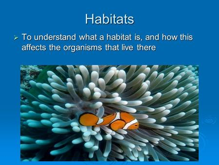 Habitats  To understand what a habitat is, and how this affects the organisms that live there.