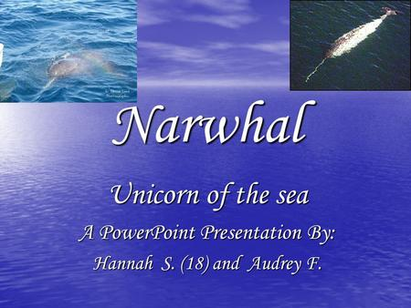Narwhal Unicorn of the sea A PowerPoint Presentation By: Hannah S. (18) and Audrey F.
