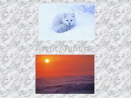 The name of our habitat is the Arctic and Alpine Tundra regions of the North Pole. The arctic is a very cold, windy, and snow covered. It can be as.