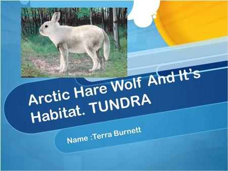 Arctic Hare Wolf And It's Habitat. TUNDRA