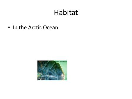 Habitat In the Arctic Ocean. Description Brown 800 pounds 10 feet.