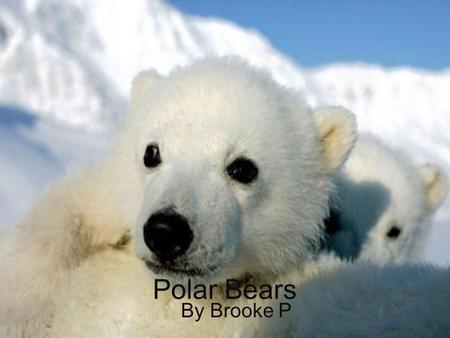 Polar Bears By Brooke P. Physical Characteristics Covered in thick creamy white fur. Female polar bears are smaller than eight feet long. An average male.