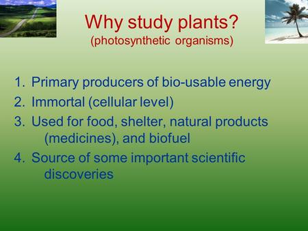Why study plants? (photosynthetic organisms) 1.Primary producers of bio-usable energy 2.Immortal (cellular level) 3.Used for food, shelter, natural products.