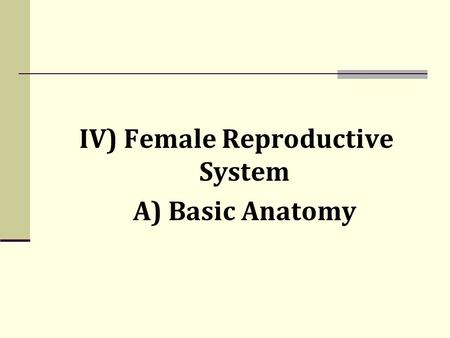 IV) Female Reproductive System A) Basic Anatomy. IV) Female Reproductive System A) Basic Anatomy.
