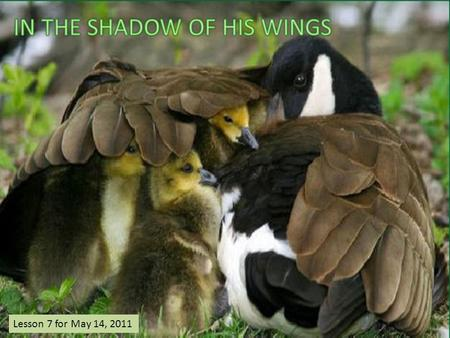 "Lesson 7 for May 14, 2011. ""Keep me as the apple of Your eye; Hide me under the shadow of Your wings"" (Psalm 17: 8) ""I will abide in Your tabernacle forever;"