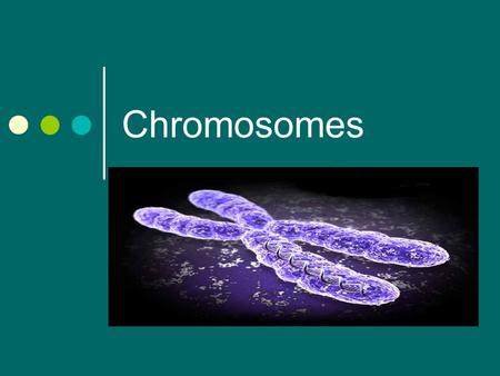 Chromosomes. Chromosome Formation Histone Proteins- Help maintain shape of the chromosome Chromosomes- ROD Shaped structure made of DNA and Protein.