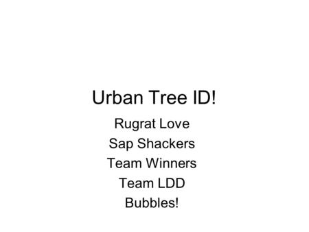 Urban Tree ID! Rugrat Love Sap Shackers Team Winners Team LDD Bubbles!