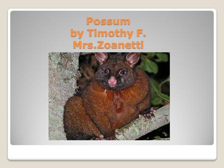 Possum by Timothy F. Mrs.Zoanetti Appearance Silver, Gray, Silver-Gray, Brown, Dark Red, Black, Gold. Long Tail, Fur, Females have babies in a pouch.