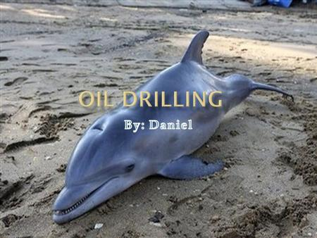 OOil drilling has interfered and ruined natures existent, not only did it vitiation nature, it killed many endangered animals, even people were killed.
