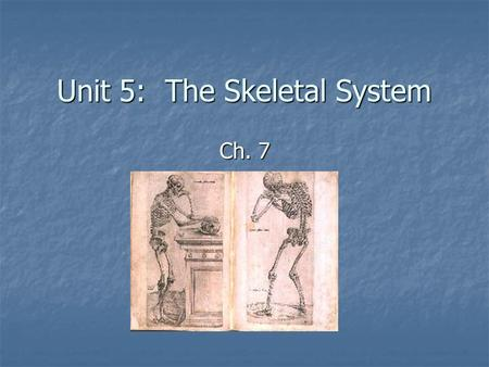 Unit 5: The Skeletal System Ch. 7. General Organization 206 bones* Axial Skeleton – down the center Axial Skeleton – down the center Skull Skull Cranium.