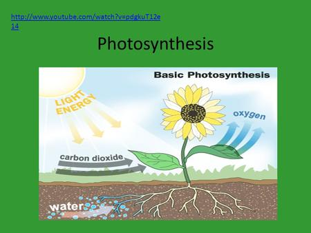 Photosynthesis  14.