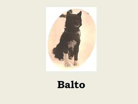 Balto. Balto and his team lined up in Nome, probably just after the serum run.