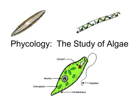 Phycology: The Study of Algae. Some restricted to marine environment (reds and browns), some to freshwater (our focus) Characterized by morphology, biochemistry,