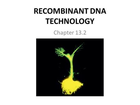 RECOMBINANT DNA TECHNOLOGY Chapter 13.2. GENETIC ENGINEERING Genetic Engineering: – Involves cutting (cleaving) DNA from one organism into small fragments.