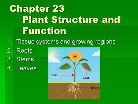 Chapter 23 Plant Structure and Function