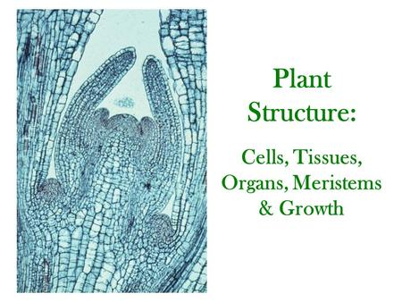 Plant Structure: Cells, Tissues, Organs, Meristems & Growth.