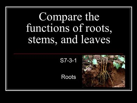 Compare the functions of roots, stems, and leaves S7-3-1 Roots.