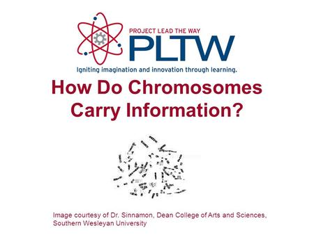 How Do Chromosomes Carry Information? Image courtesy of Dr. Sinnamon, Dean College of Arts and Sciences, Southern Wesleyan University.