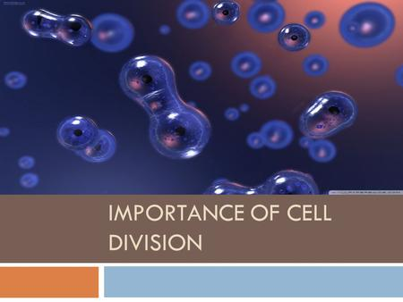 IMPORTANCE OF CELL DIVISION.  Think about the last time you had a sun burn and your skin peeled off.  What if new skin cells didn't replace the dead.