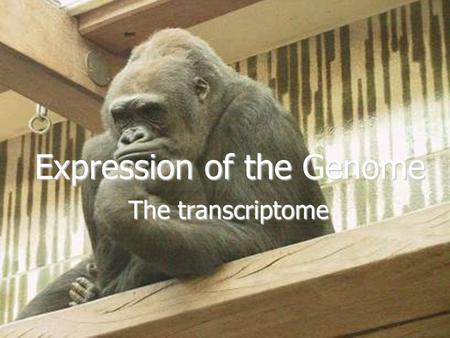 Expression of the Genome The transcriptome. Decoding the Genetic Information  Information encoded in nucleotide sequences contained in discrete units.