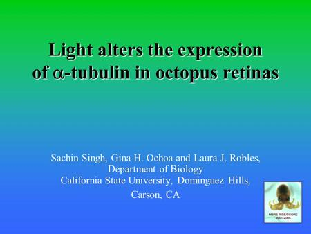 Light alters the expression of  -tubulin in octopus retinas Sachin Singh, Gina H. Ochoa and Laura J. Robles, Department of Biology California State University,
