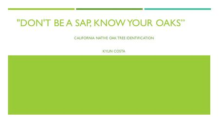 "DON'T BE A SAP, KNOW YOUR OAKS"" CALIFORNIA NATIVE OAK TREE IDENTIFICATION KYLIN COSTA."