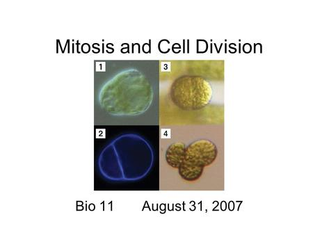 Mitosis and Cell Division Bio 11 August 31, 2007.