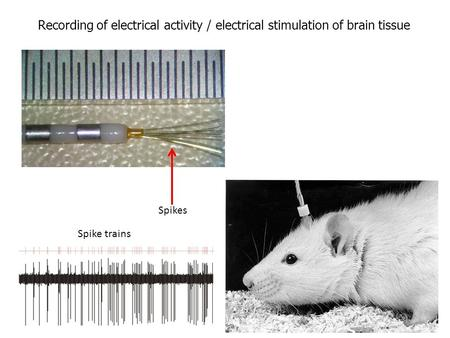 Recording of electrical activity / electrical stimulation of brain tissue Spike trains Spikes.