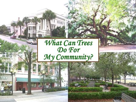 What Can Trees Do For My Community?. Jim Self Center Strom Thurmond Institute Clemson University Trees Help Reduce The Greenhouse Effect Issue: Poor air.