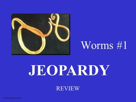 Worms #1 REVIEW JEOPARDY S2C06 Jeopardy Review Flatworms Segmented worms Roundworms Body parts Body parts Life cycles 100 200 300 400 500.