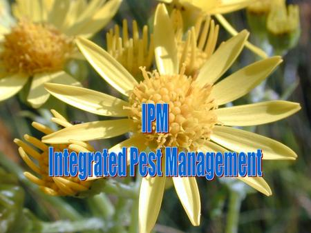 What is IPM??? IPM (integrated pest management) is a sustainable approach to managing pests by combining biological, chemical, cultural, and physical.
