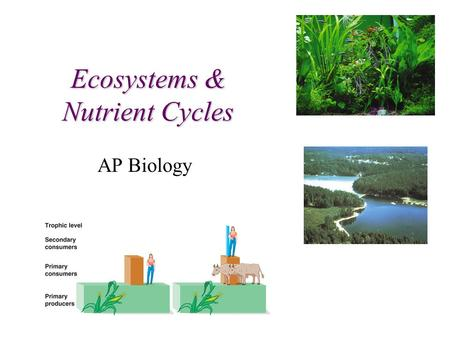 Ecosystems & Nutrient Cycles AP Biology Trophic Relationships.