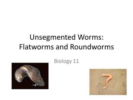Unsegmented Worms: Flatworms and Roundworms Biology 11.