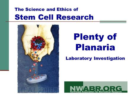 Plenty of Planaria Laboratory Investigation The Science and Ethics of Stem Cell Research.