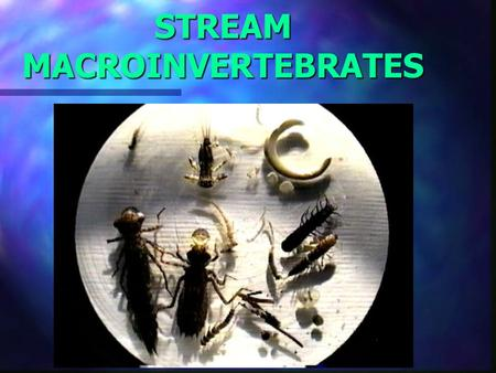 STREAM MACROINVERTEBRATES. Biotic Indicators Why are they Important? Easy to find and collect Easy to find and collect Live in water most of their life.