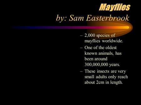 Mayflies by: Sam Easterbrook –2,000 species of mayflies worldwide. –One of the oldest known animals, has been around 300,000,000 years. –These insects.