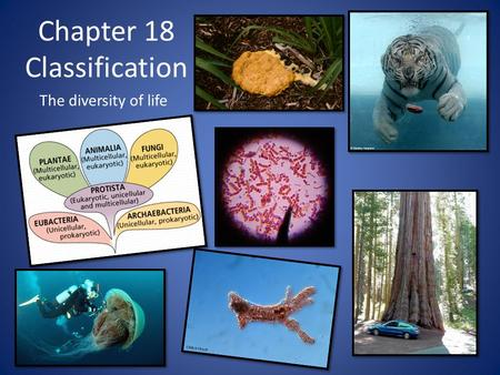 Chapter 18 Classification The diversity of life. Why is it necessary to classify? 1.5 million species on the planet so all creatures must be organized.