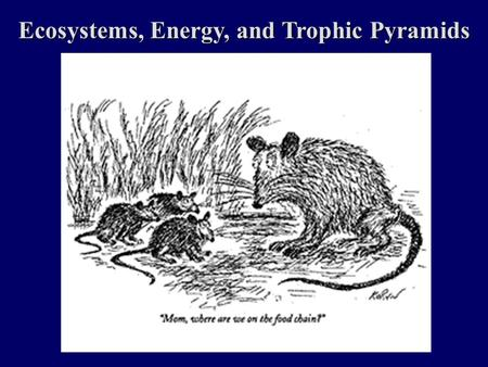 Ecosystems, Energy, and Trophic Pyramids. Ecosystems And Energy Energy Laws of Thermodynamics Photosynthesis/Respiration Trophic Pyramids Energy Flow.