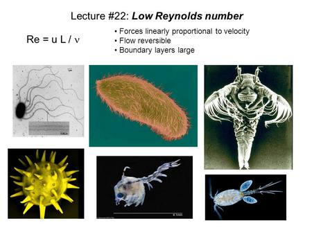 Lecture #22: Low Reynolds number Re = u L / Forces linearly proportional to velocity Flow reversible Boundary layers large.