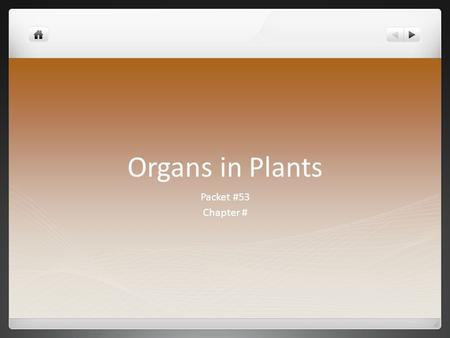 Organs in Plants Packet #53 Chapter #. Introduction There are four major organs of a plant Flower* (Not all plants) Stem Leaf Root.