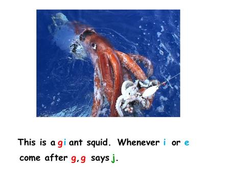 This is a ant squid.giWhenever orie come after saysg,g,gj.j.
