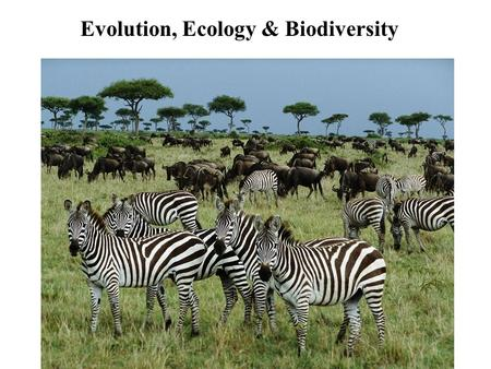 Evolution, Ecology & Biodiversity. This course covers: - Population Genetics - Evolution - Diversity of life - Ecology - major theme of the course is.