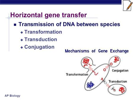 AP Biology Horizontal gene transfer Transmission of DNA between species  Transformation  Transduction  Conjugation.