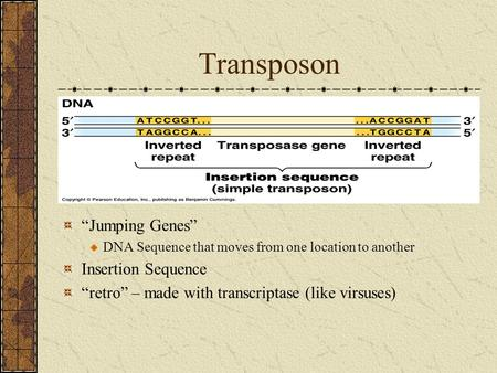"Transposon ""Jumping Genes"" DNA Sequence that moves from one location to another Insertion Sequence ""retro"" – made with transcriptase (like virsuses)"