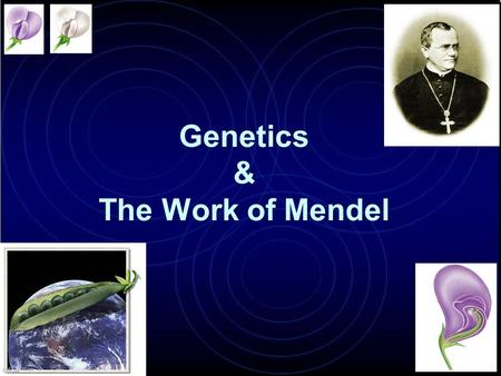 Genetics & The Work of Mendel Modern genetics began in the mid-1800s in an abbey garden, where a monk named Gregor Mendel documented inheritance in peas.