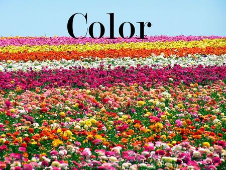 Color.  The visual response of the eye to reflected rays of light  Element of floral design  3 dimensions of color  Hue  Value  Chroma.