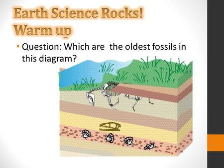 Question: Which are the oldest fossils in this diagram?