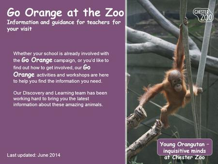 Go Orange at the Zoo Information and guidance for teachers for your visit Last updated: June 2014 Young Orangutan – inquisitive minds at Chester Zoo Whether.